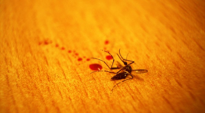 JUSTICE FOR 'MANNY' THE MOSQUITO
