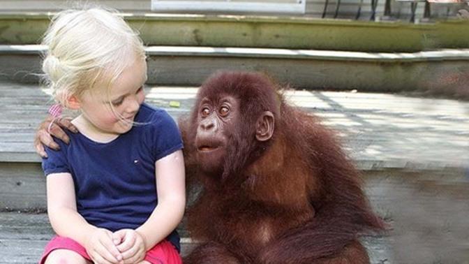 CREO QUE LA VIDA ANIMAL ES TAN VALIOSA COMO LA VIDA HUMANA